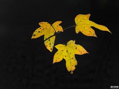 【叶子的故事】+叶子的追求