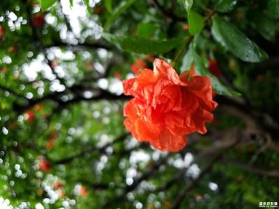 【中国最美瞬间】+万绿丛中一点红