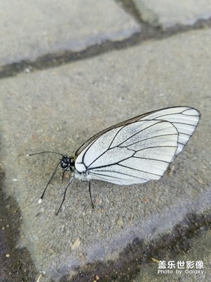 很是配合的蝴蝶小姐姐