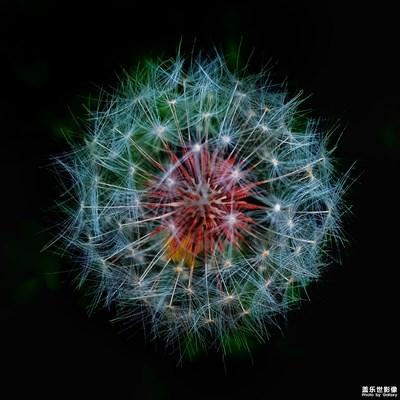 【叶子的故事】+一花,一叶,一世界。