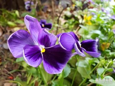 最美瞬间+魅力紫