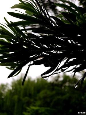 【中国最美瞬间】+树叶摇曳