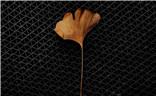 一花,一叶,一世界