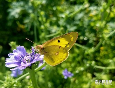 我是一只快乐的蝴蝶