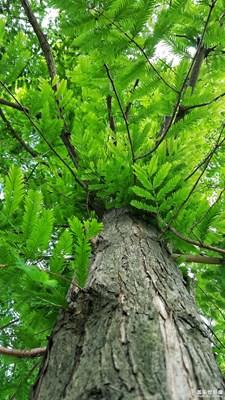 【叶子的故事】+绿叶对根的思恋