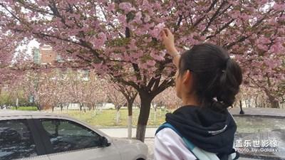 樱花抚发梢