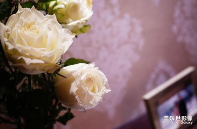 【中国最美瞬间】+最爱的是白玫瑰