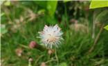 【中国最美瞬间】+盛开的小花