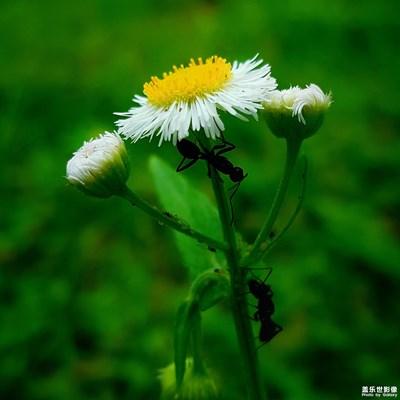 【夏之花】+夏天的颜色