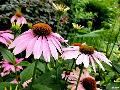 【夏之花】+小野花