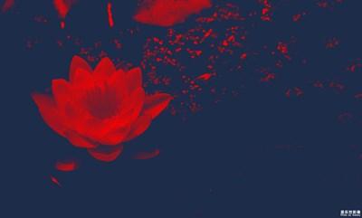 【夏之花】那些花