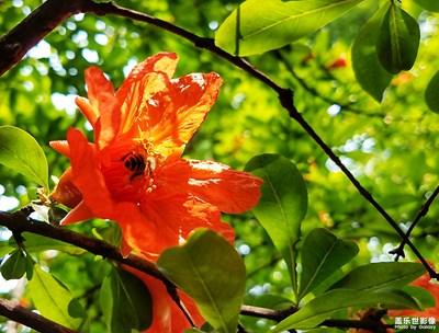 【夏之花】鲜花盛开的村庄