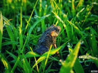 青蛙和癞蛤蟆的故事