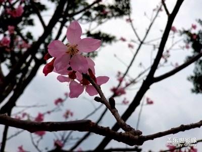 【夏之花】+序篇