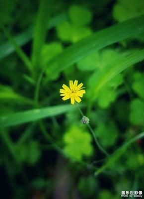 【夏之花】+无名小野花