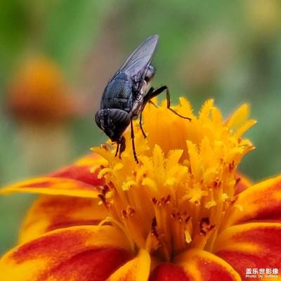 【中国最美瞬间】+昆虫记