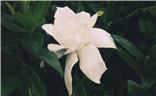 【夏之花】+几朵小花