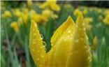 夏季哈尔滨之花