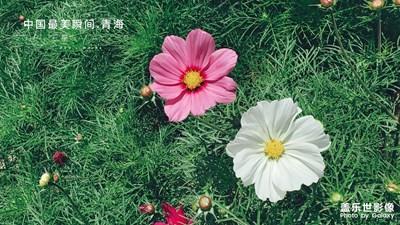 【中国最美瞬间】祁连山沿途