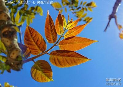 【叶子是个故事】+穿透