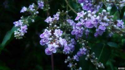 花开花谢__本来就是生命的一部分……
