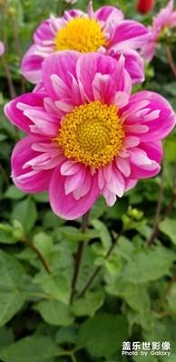 美丽的花朵。
