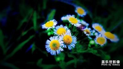 【定格美好】+野花的美