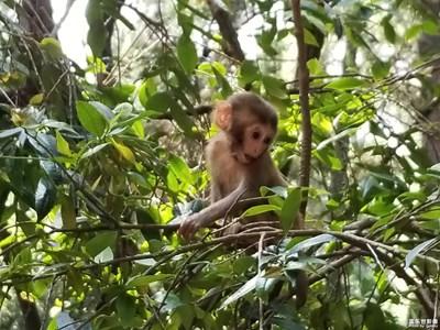 偶遇-小猴