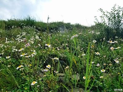 大美九龙湾之一:花草篇