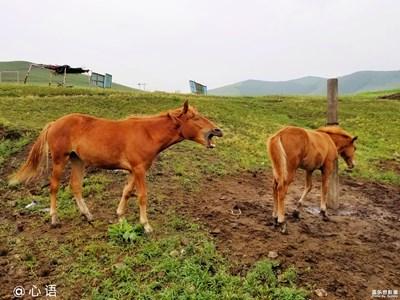【简单生活】+早起的马儿