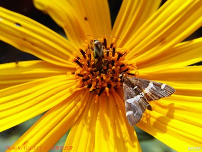 【微拍】+昆虫与花朵