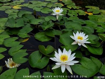 【Galaxy Note9】莲与荷