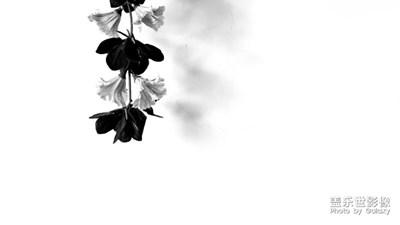 【自然之美】+极简摄影