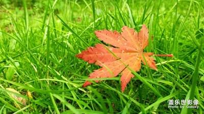 沈阳世博园红叶