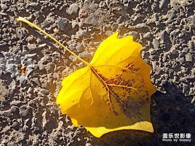 【自然之美】+一些落叶🍂