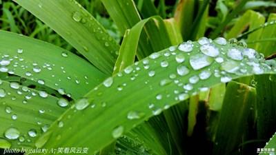 【雨后清新】+晴朗