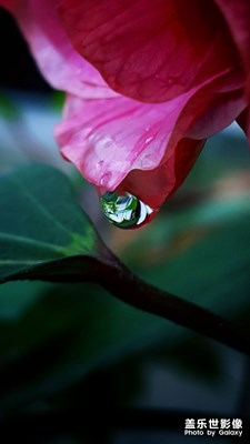 秋雨过后~红