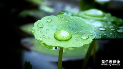 秋雨过后~绿