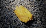 【自然之美】+一些落叶