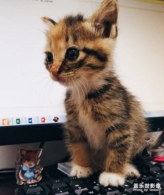 猫咪随手拍