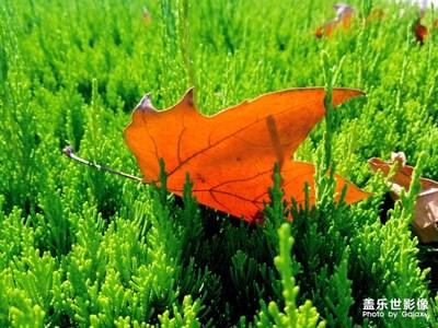一片落叶渲染了秋色 一季落花沧桑了流年