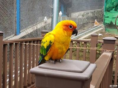 Note9镜头下的鸟