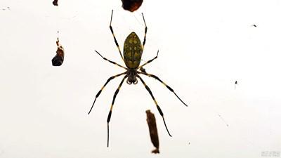 【热爱生活】+蜘蛛--知足--知足常乐