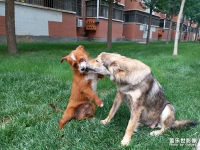 学校里的两只流浪狗