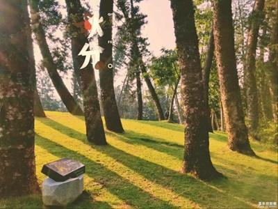 【秋至】+一花知秋