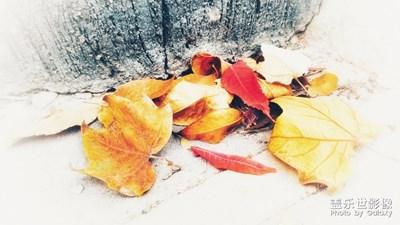 【秋至】+春来花之清 秋至叶飘零