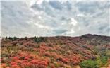 周末赏红叶之旅-博山九龙峪