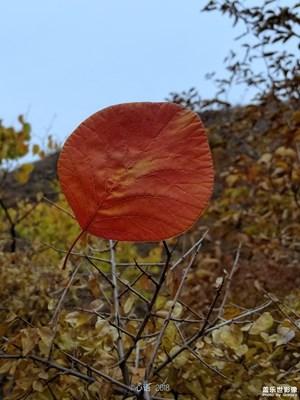 【秋至】+秋之小景