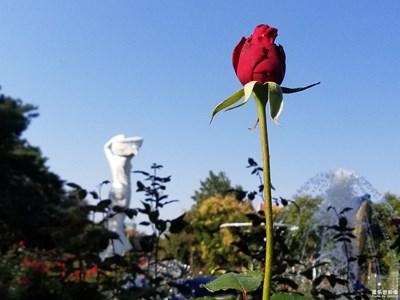 月季园之花