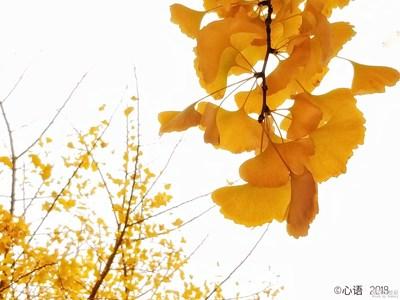 【三星S8+】故都的秋